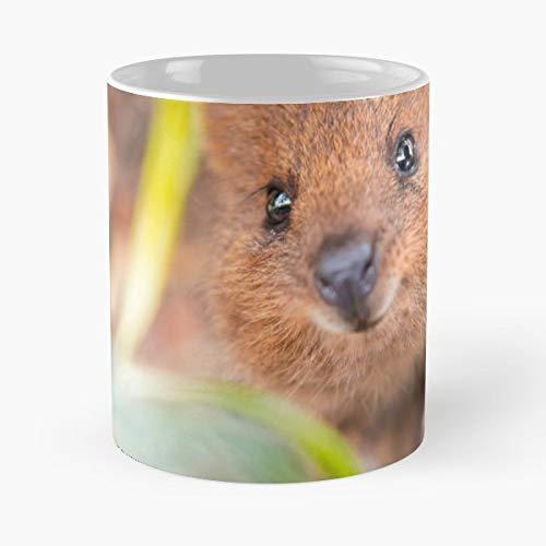 Best 11 Ounce Ceramica Coffee Mug Gift Animals Quokka Animal Encounter World Tour Australia Animalencounterwt Wildphototees