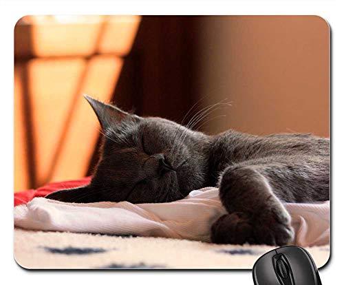 (Mouse Pads - Chartreux Cat Animals Pet Mieze 7)