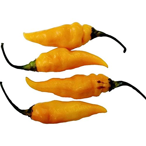 - Datil Yellow Seeds by Pepper Joe's - 10+ Seeds Per Pack