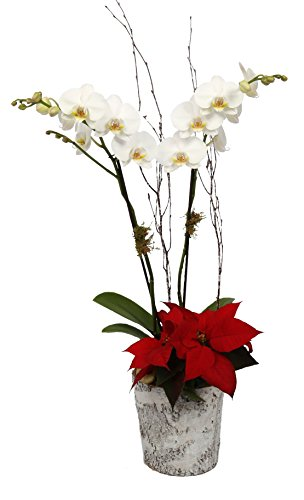 Color Orchids Large Holiday Garden Planters