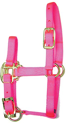 Nylon Halter Foal - Hamilton 3/4-Inch Adjustable Quality Horse Halter, Foal or Average Miniature Horse, Hot Pink