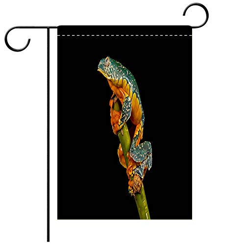 - BEICICI Double Sided Premium Garden Flag Fringed Leaf Frog Decorative Deck, Patio, Porch, Balcony Backyard, Garden or Lawn