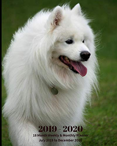 2019 - 2020 | 18 Month Weekly & Monthly Planner July 2019 to December 2020: Samoyed Dog Breed Animal Vol 41 Monthly Calendar with U.S./UK/ ... Holidays- Calendar in Review/Notes 8 x 10 in. ()