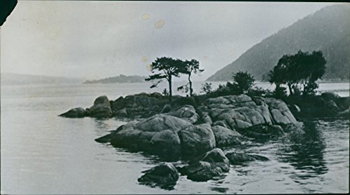 Vintage photo of Trees on rock in Norway.