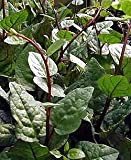 Climbing Malabar Spinach 60 Seeds - Ornamental/Edible