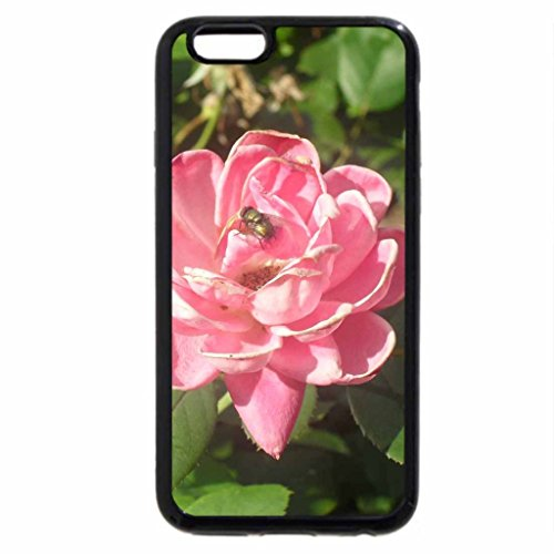 iPhone 6S / iPhone 6 Case (Black) Fly On A Pink Rose