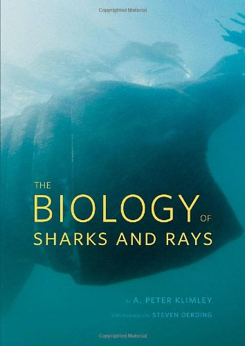 The Biology of Sharks and - Chicago In Store Fossil
