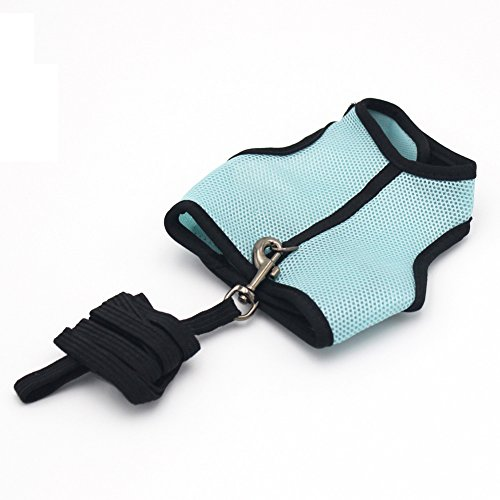 Harness with Leash for Small Pets