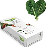 Garden Starter Kit (Collard Greens) Grow a Garden by Seed. Germinate Seeds on Your Windowsill Then Move to a Patio Planter or Vegetable Patch. Mini Greenhouse System Makes it Foolproof, Easy and Fun.