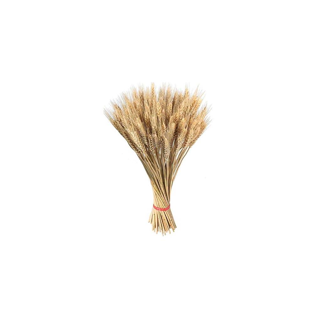 100pcs-Natural-Dried-Wheat-Sheaves-Flower-Arrangement-Wedding-Party-Centerpieces-Table-Decoration