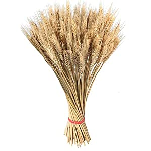 Heilsa 100PCS Dry Grass Bouquet Decoration Wedding Craft Props High Simulation-2 Bunch,Artificial Flower,Stalk,Wheat,Naturally Dried Flowers for Home Party Decorations 68