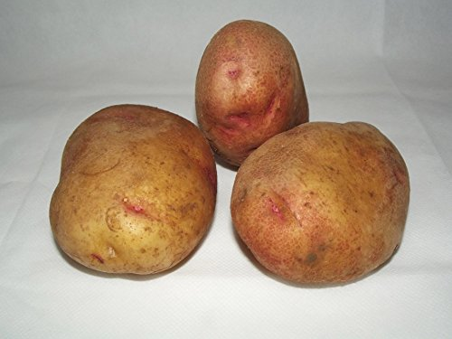 King Edward Potato - 3