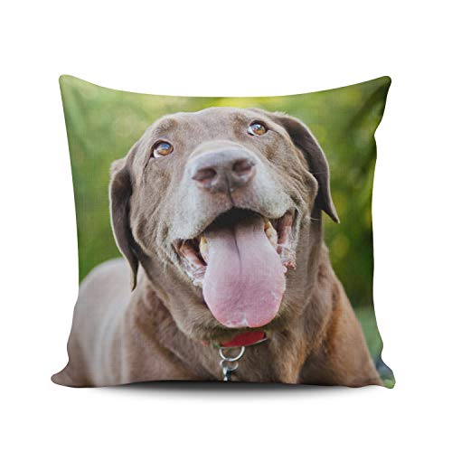 WULIHUA Throw Pillow Cases Sofa Cushion Cover Home Decoration Chocolate Lab Dog Square Custom Pillowcase Size 16X16 Inch Simple and Elegant Double Sides Printed