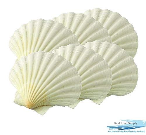 Ocean View Huge Baking Scallop Shells 4+