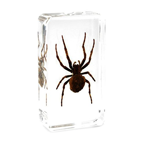Spider Paperweight - QTMY Biology Science World Collection of Real Insect Specimen Paperweight for Kids Education Toy (Face spider(Neriene emphana))
