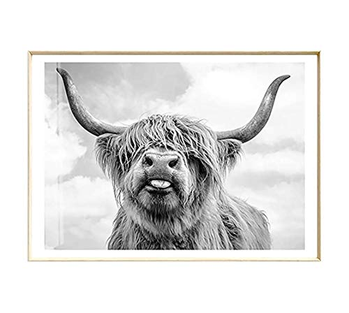 Artliving Cute Highland Cow Sticking Tongue Out Art Print Poster for Home Decor Wall Decor Unframed 60×90 cm
