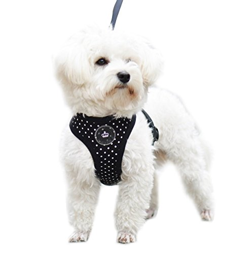 Black Extra Small Soft Mesh Polka Dots Dog Harness with Matching (Extra Small Dog Apparel)