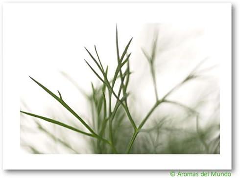 Aroma natural Eneldo, puntitas de ramas 900 g
