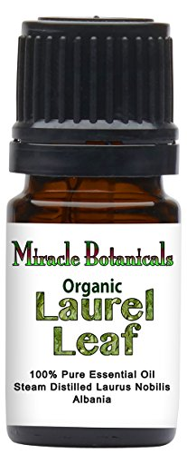 Miracle Botanicals Organic Laurel Leaf Essential Oil   100  Pure Laurus Nobilis   Therapeutic Grade   5Ml