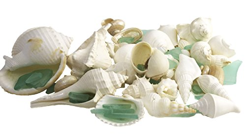 White Decorative Sea Shell and Mint Green Sea Glass |1 Pound Shells for Decoration | Shells for Craft | Nautical Crush Trading TM Sea Mint