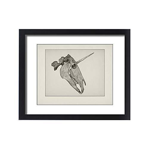 Media Storehouse Framed 20x16 Print of Unicorn Skull Etching (15217982)