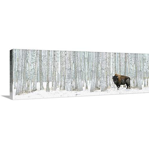 Buffalo Standing in Snow Among Poplar Trees in Elk Island National Park; Alberta, Canada Canvas.