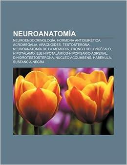 Neuroanatomía: Neuroendocrinología, Hormona antidiurética