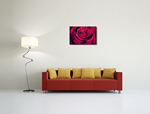 Closeup of Dark Red Rose Flower Against Black Background Wall Decor