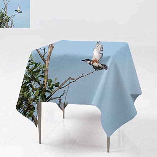 AFGG Washable Square Tablecloth,Belted Kingfisher Takes Off,Great for Buffet Table, Parties& More,54x54 Inch