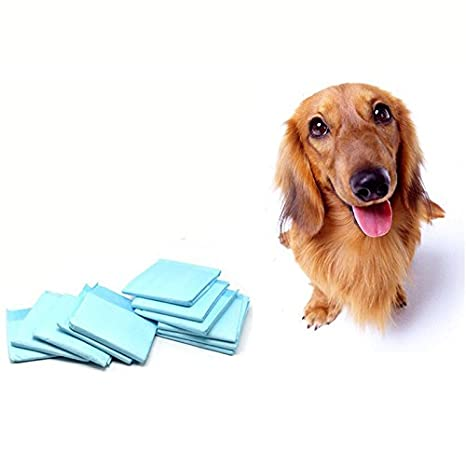 Pañales para perros regla