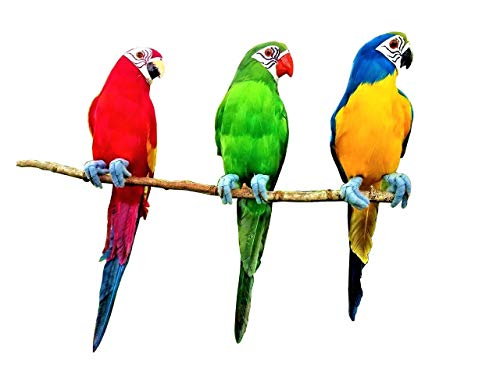 All Seas Imports (3) Handcrafted Ultra Lightweight Parrots with Real Feathers/Bendable FEET!