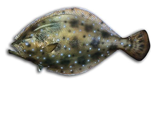 35'' Flounder Half Mount Fish Replica , Fishing Wall & Coastal Decor by Mount This Fish Company