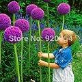 Rare flower, 20pcs/bag Giant Onion (Allium giganteum) seed beautiful flower bonsai plant home garden free shipping