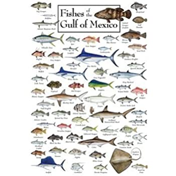 Fishes of the Gulf of Mexico Regional Fish Poster by Steven M. Lewers & Associates