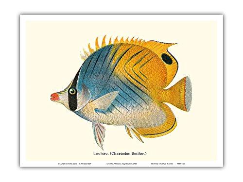 fish art prints - 3