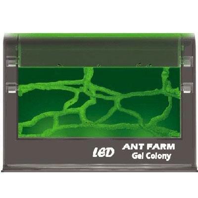 Ant Farm:lighted Gel Colony