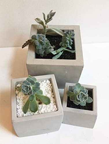 Planter Assortment - Concrete Planter -Square Assortment FREE SHIPPING in USA