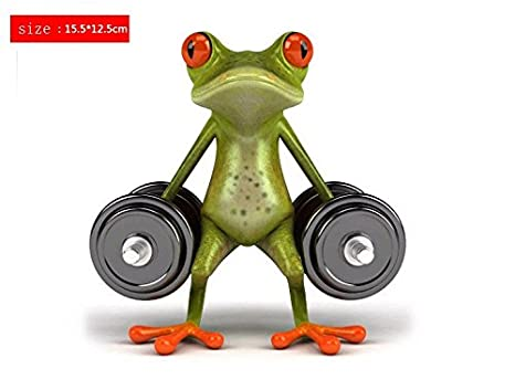appareil musculation grenouille