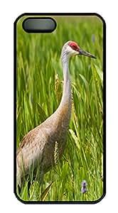 Sandhill Crane Animal PC Case Cover for iPhone 5 and iPhone 5s ¨CBlack
