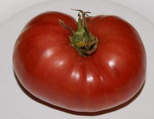 german giant tomato seeds - 8