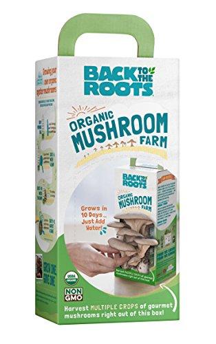 The 8 best mushrooms kits