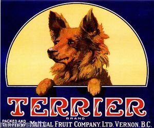 (MAGNET Vernon, B.C. Canada Terrier Dog Canadian Apples Apple Fruit Crate Magnet Print)