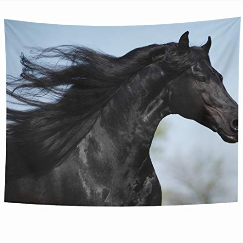 (Ahawoso Tapestry 80x60 Inch Thoroughbred Black Gorgeous Friesian Stallion Long Mane Strong Running Horse Hair Speed Action Tapestries Wall Hanging Home Decor for Living Room Bedroom Dorm)