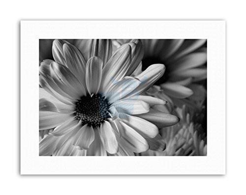 Mount Petal - Wee Blue Coo Black White Flower Petal Mount Picture Canvas Art Prints
