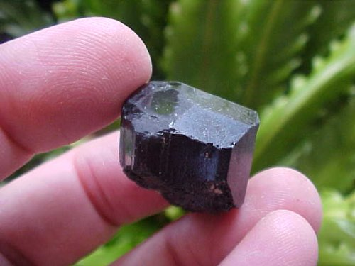 B7018 Gemqz Black Tourmaline Loose Crystal Terminated !!!