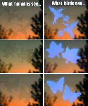 Window Alerts Butterflies Amazoncouk Garden  Outdoors - Window alert hummingbird decals amazon