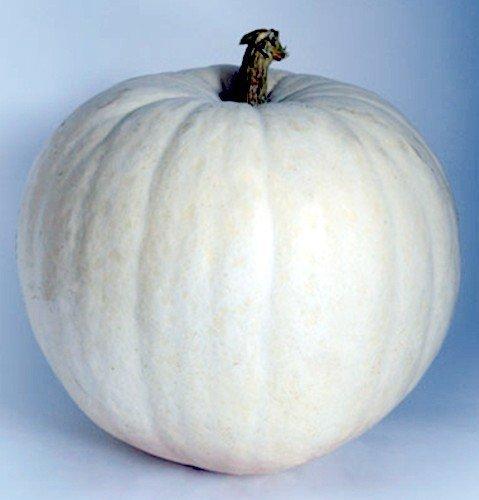 - Polar Bear Pumpkin 10 Seeds - Extra Large White Fruit