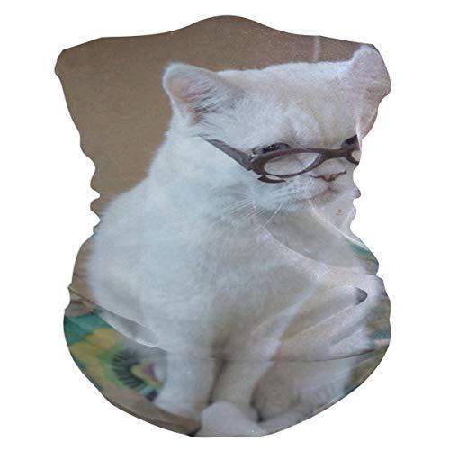 Funny Cats Balaclava Womens Headband Scarf Mens Versatile Bandana, Muffler, Neck Gaiter, Magic, Facemask Collars