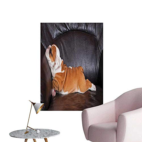 Anzhutwelve English Bulldog Photographic Wallpaper Puppy Resting on a Sofa Funny Animal Photography Cute CanineSeal Brown White Brown W24 xL36 Funny Poster