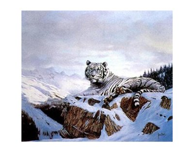 Spencer Hodge Siberian Tiger - 3